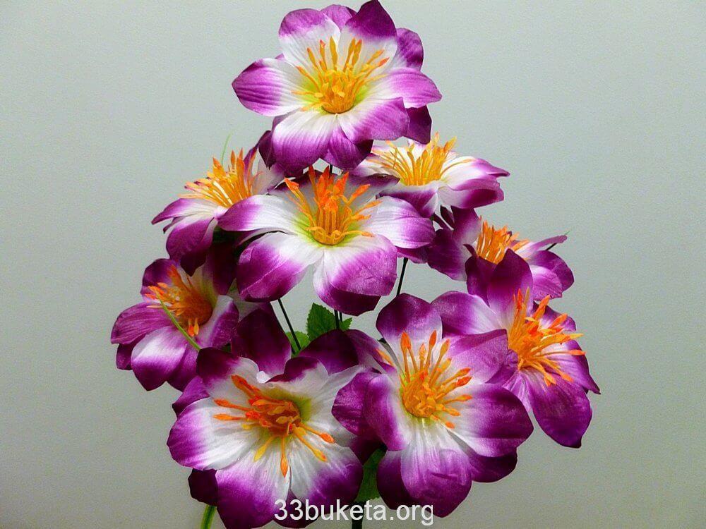 Мальва 10цветков