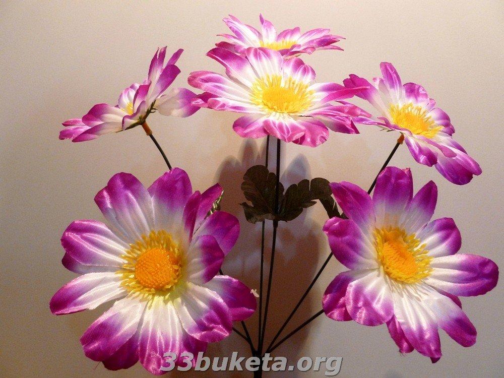 Ромашка цвет. 6 цветков