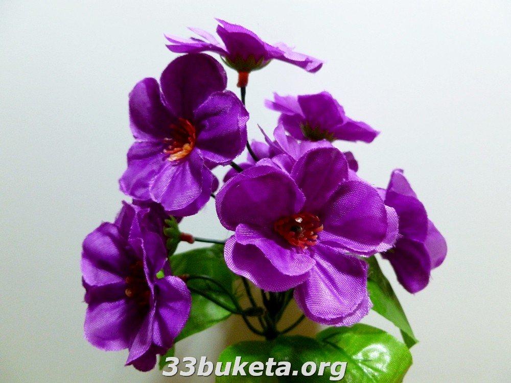 Фиалка бордюрный цветок заливка