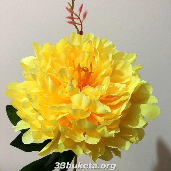 Пион ветка большой цветок