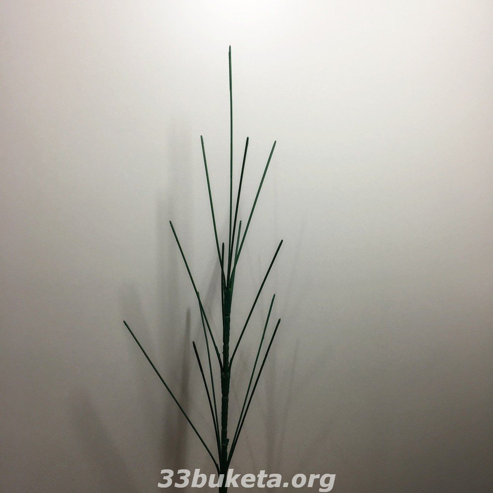 Ножка голая 13-ка без листков листик и ножки