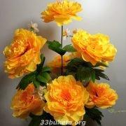 Пион 9 больших цветков
