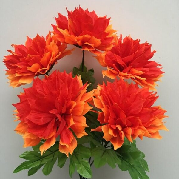 Хризантема шар