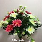 Хризантема цветная