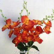 Орхидея не прессованная