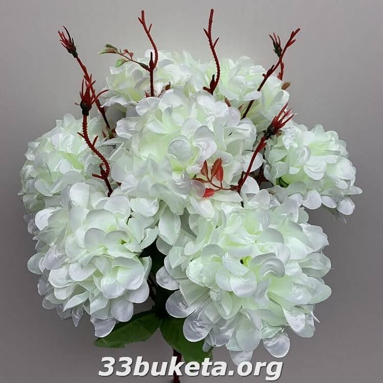 Хризантема высокая
