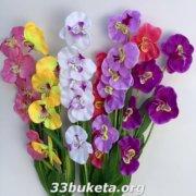 Орхидея ветка 5-ка