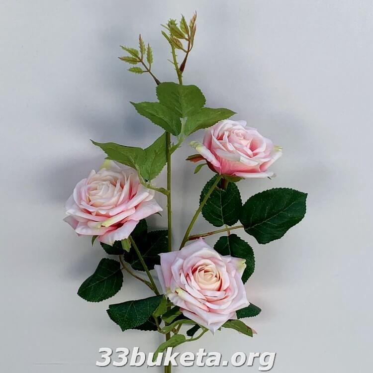 Роза ветка